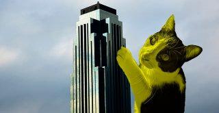 Williams Tower hidden cat